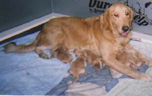 Ginger's Pups
